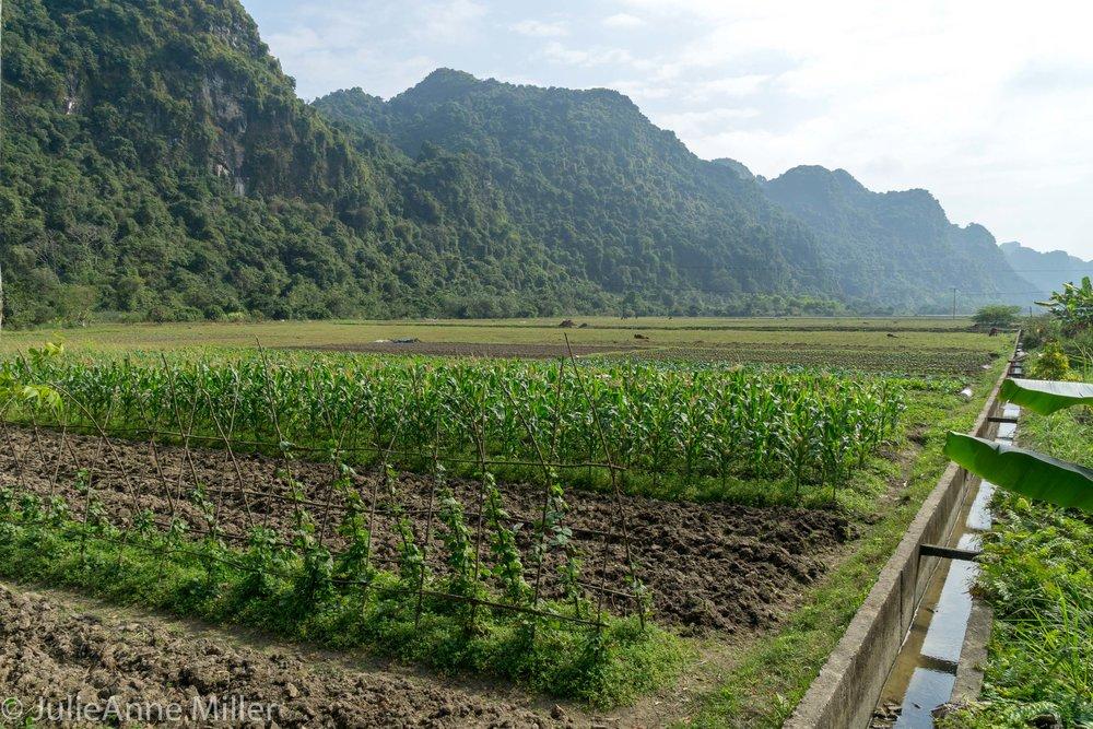 Viet Hai farming commune