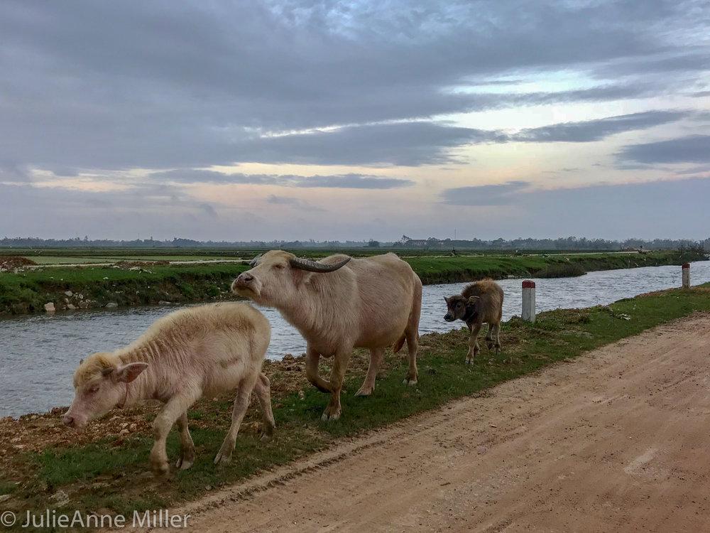 Hue Rural-3.jpg