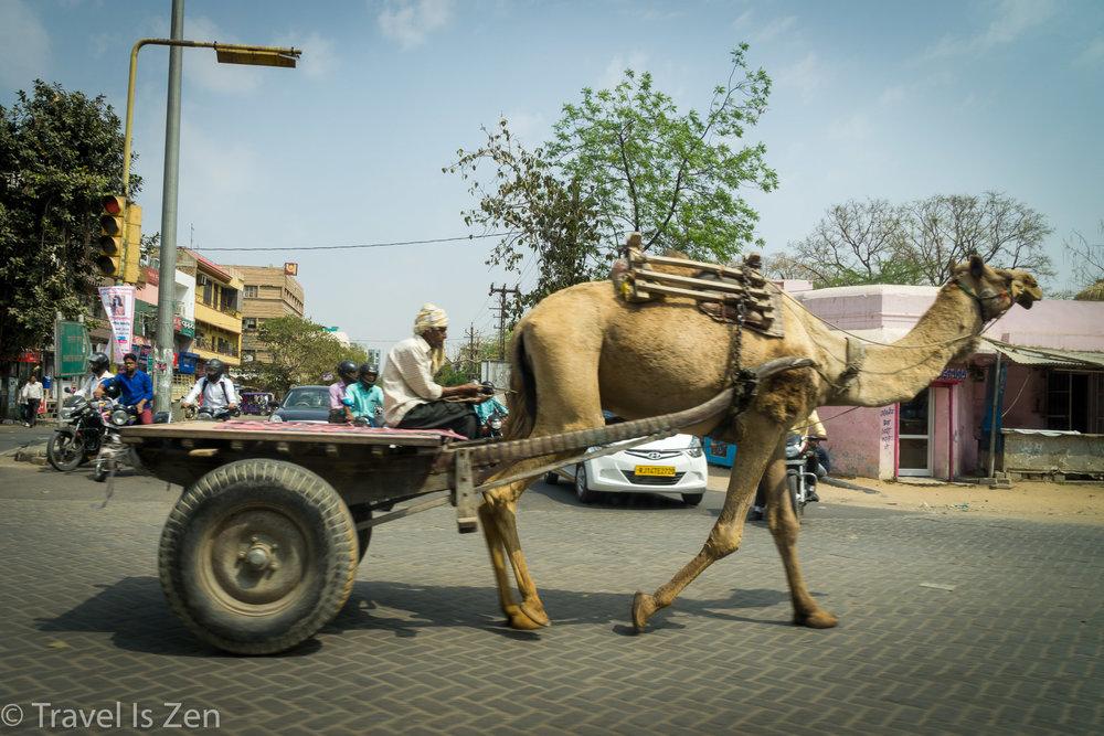 Jaipur-14.jpg