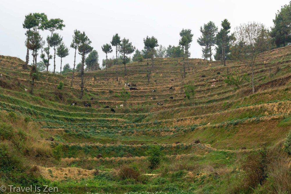 chandragiri chitlang-24.jpg