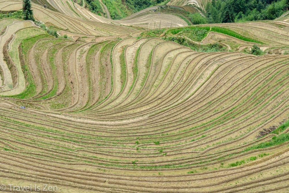 Longji Rice Terrace-12.jpg