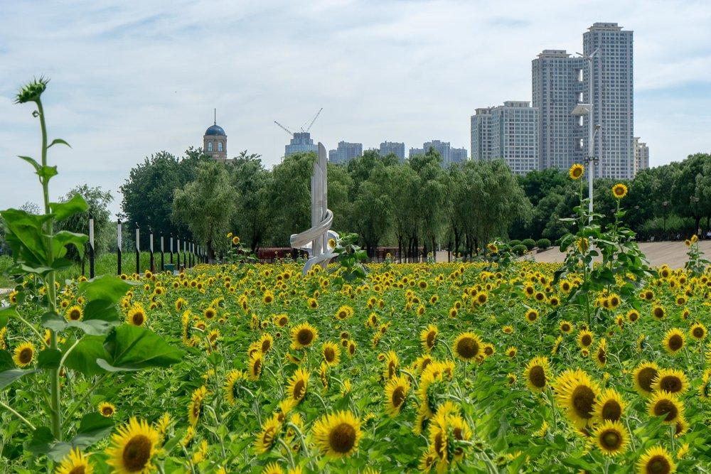 Wuhan-79.jpg