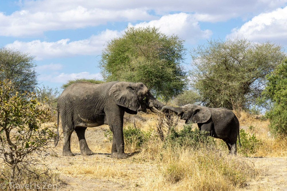 Tanzania Safari-2.jpg