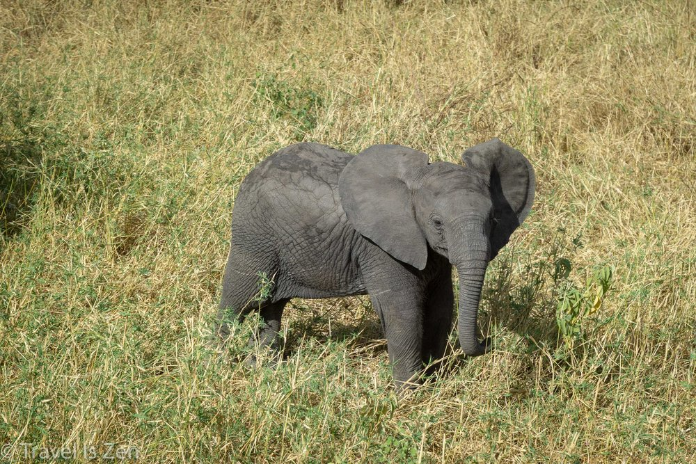 Tanzania Safari-4.jpg