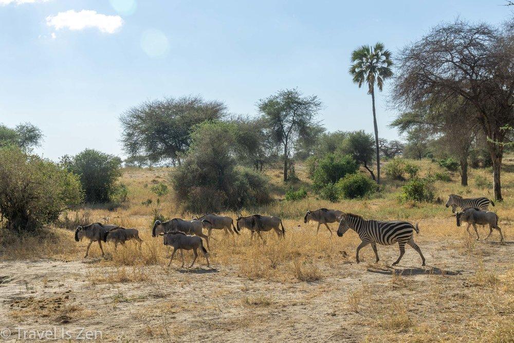 Tanzania Safari-8.jpg