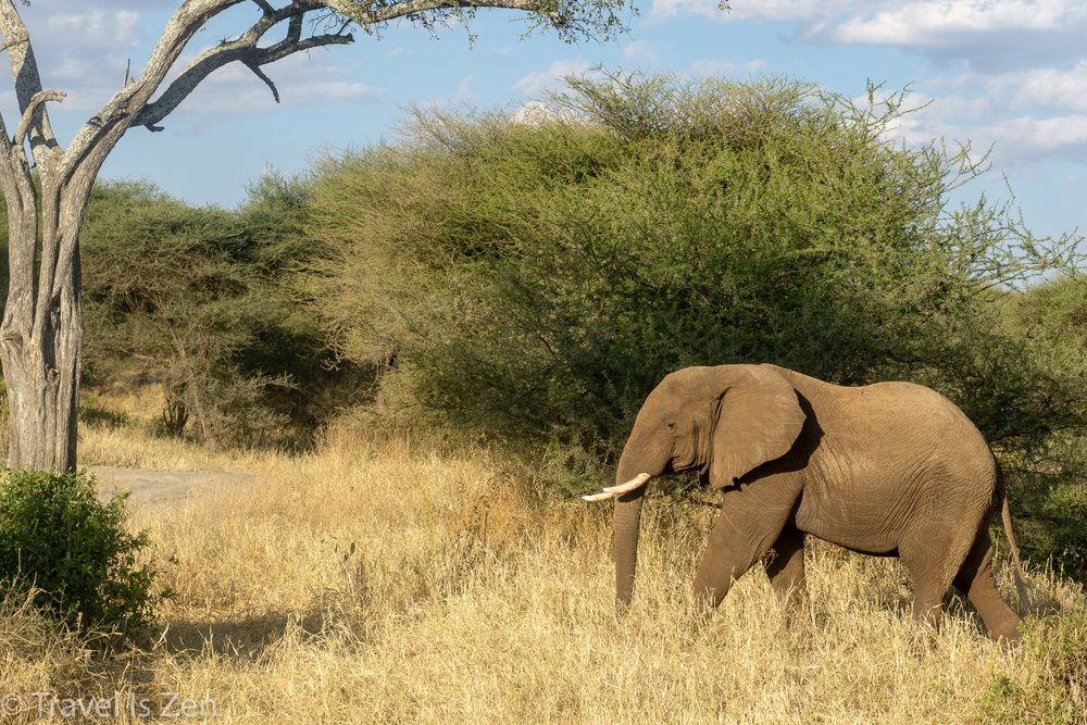 Tanzania Safari-9.jpg