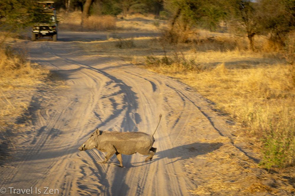 Tanzania Safari-12.jpg