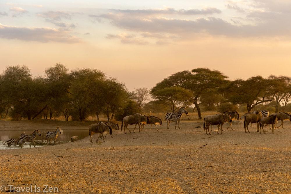 Tanzania Safari-13.jpg