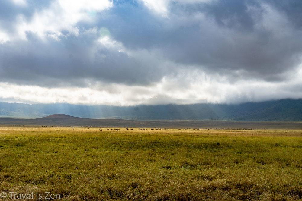 Tanzania Safari-23.jpg