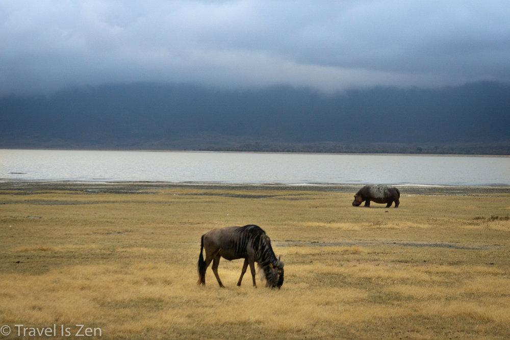 Tanzania Safari-22.jpg