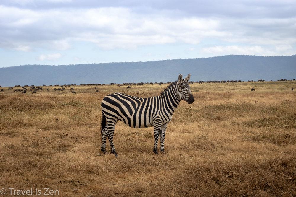 Tanzania Safari-27.jpg