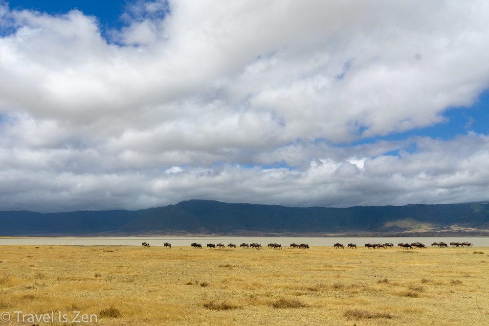 Tanzania Safari-28.jpg