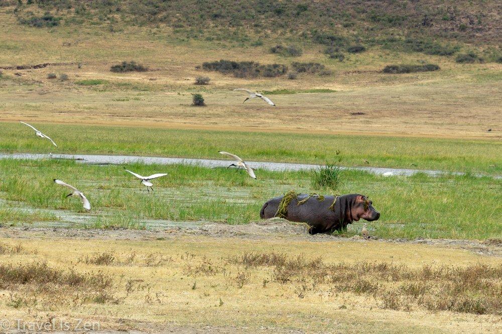 Tanzania Safari-29.jpg