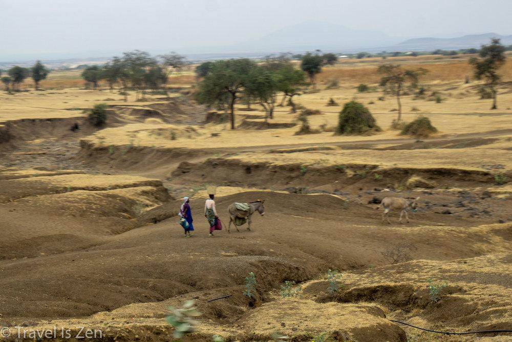 road to safari-1.jpg