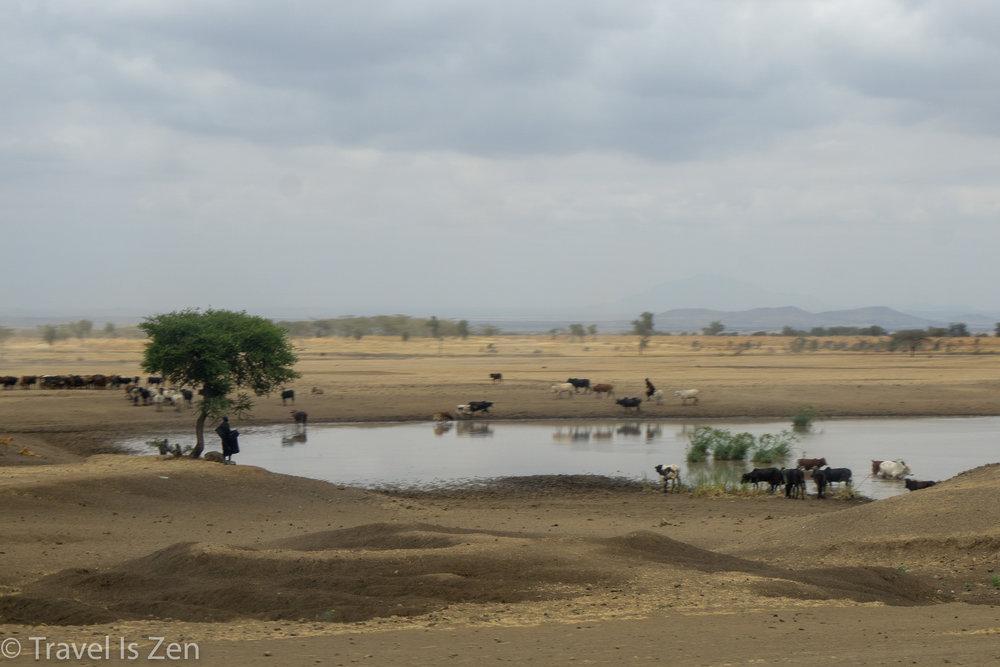 road to safari-2.jpg
