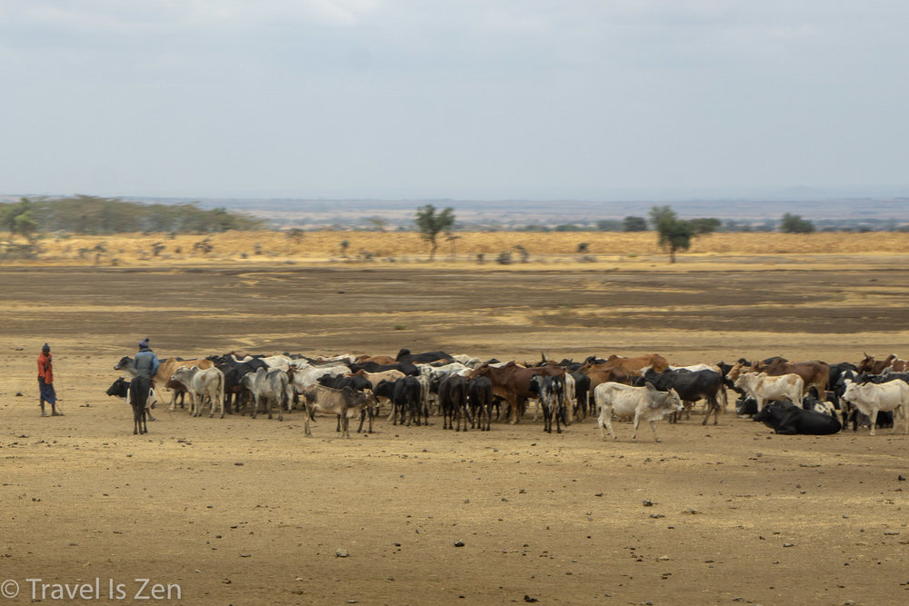 road to safari-4.jpg