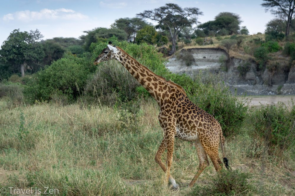 Tanzania Safari-7.jpg