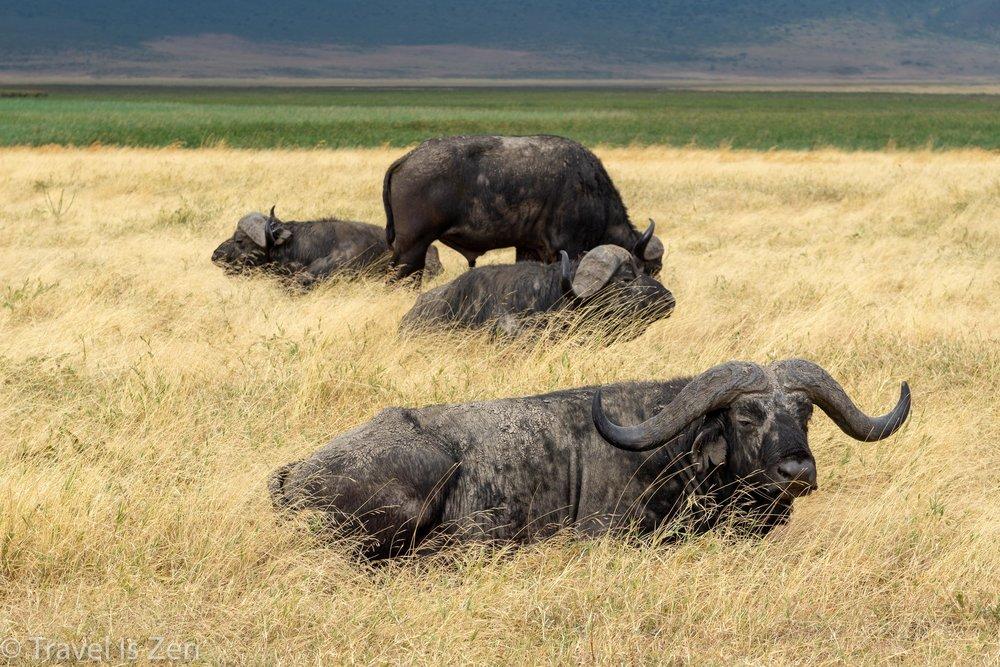 Tanzania Safari-25.jpg