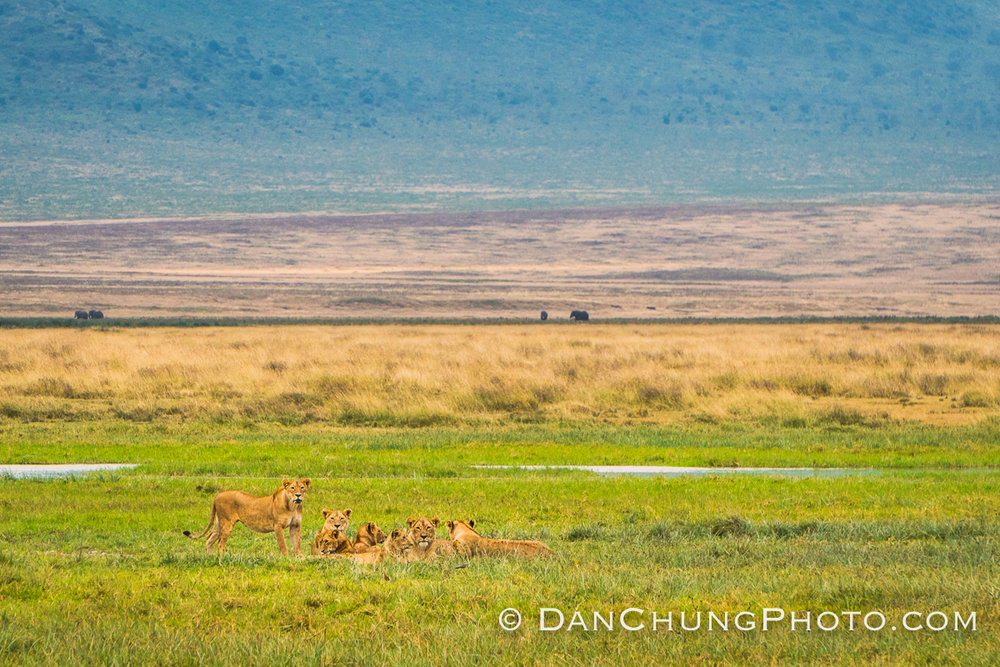 Thanks, Dan, for the photo of the lionesses!