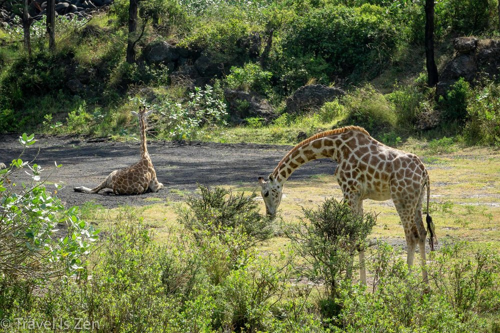 Kenya-19.jpg