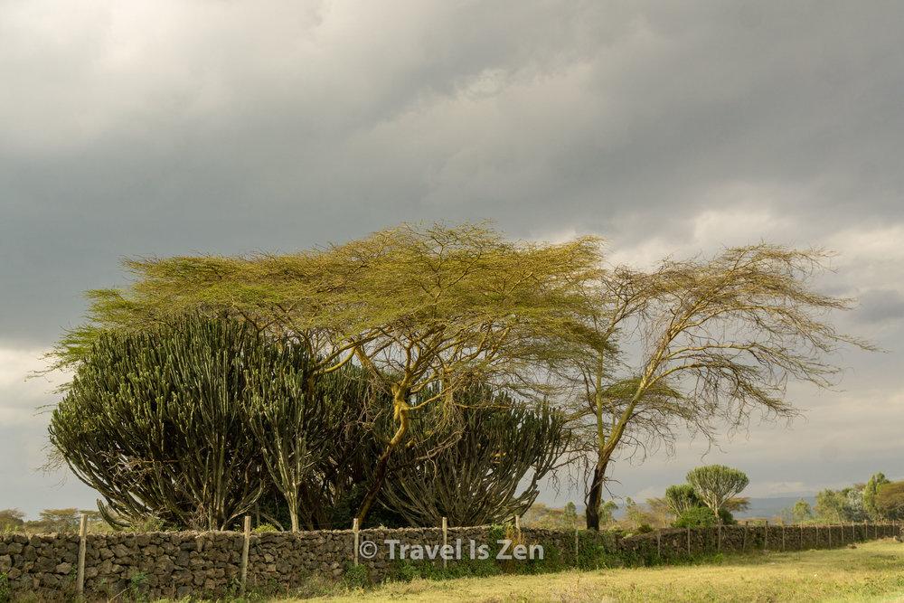 Hells Gate Kenya-31.jpg