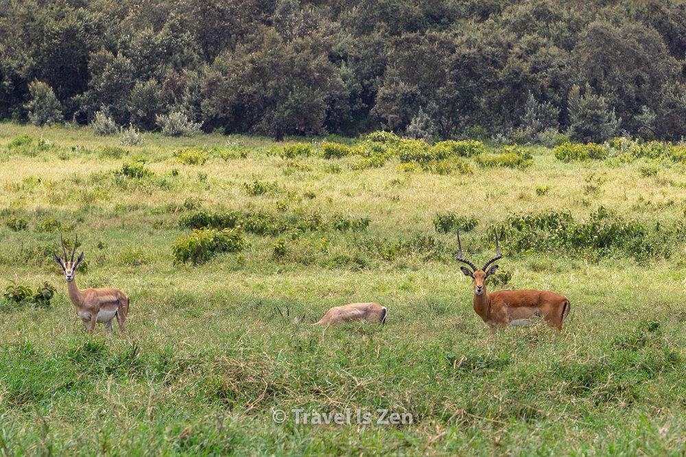 Hells Gate Kenya-13.jpg