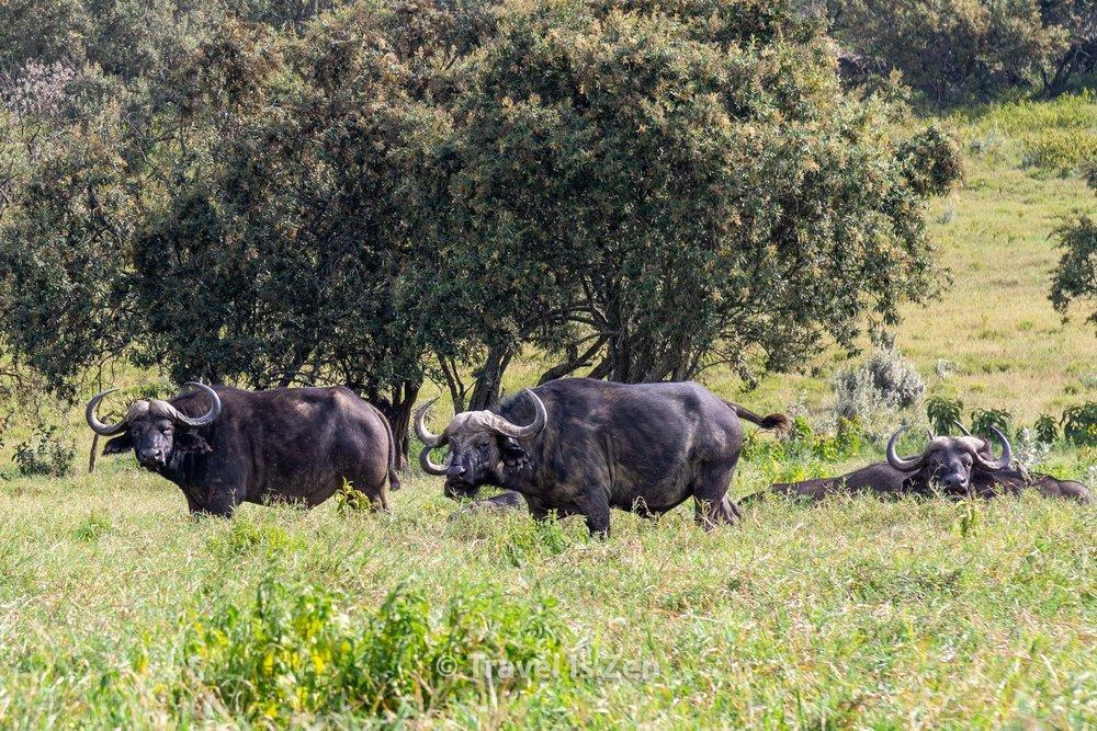 Hells Gate Kenya-26.jpg