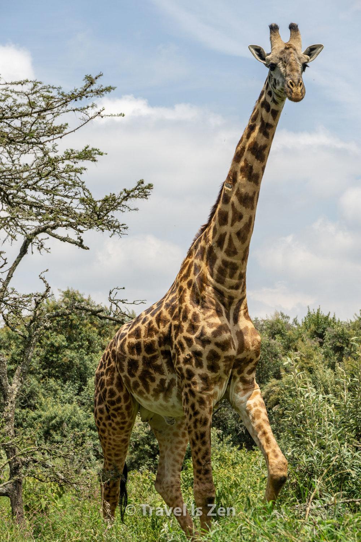 Hells Gate Kenya-20.jpg