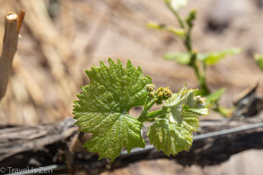 Mendoza wine region, Argentina