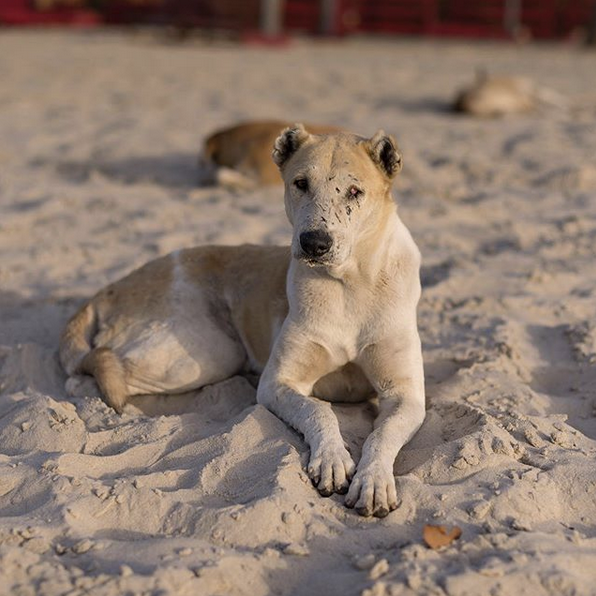 Life may have been full of hard knocks, but this dog knew how to pick itself up again. Dog with dignity, The Gambia.