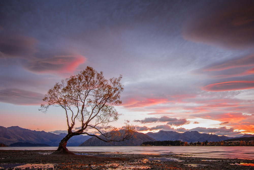 That Wanaka Tree, Wanaka, 2017