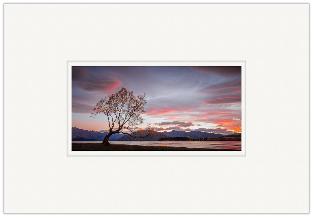 The Wanaka Tree   20cm x 40cm Photo Paper Limited Edition of 99   IDR 599,000