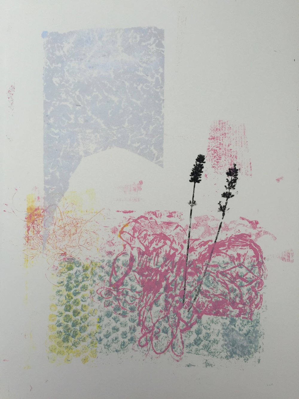 Lavendel 2017.jpg