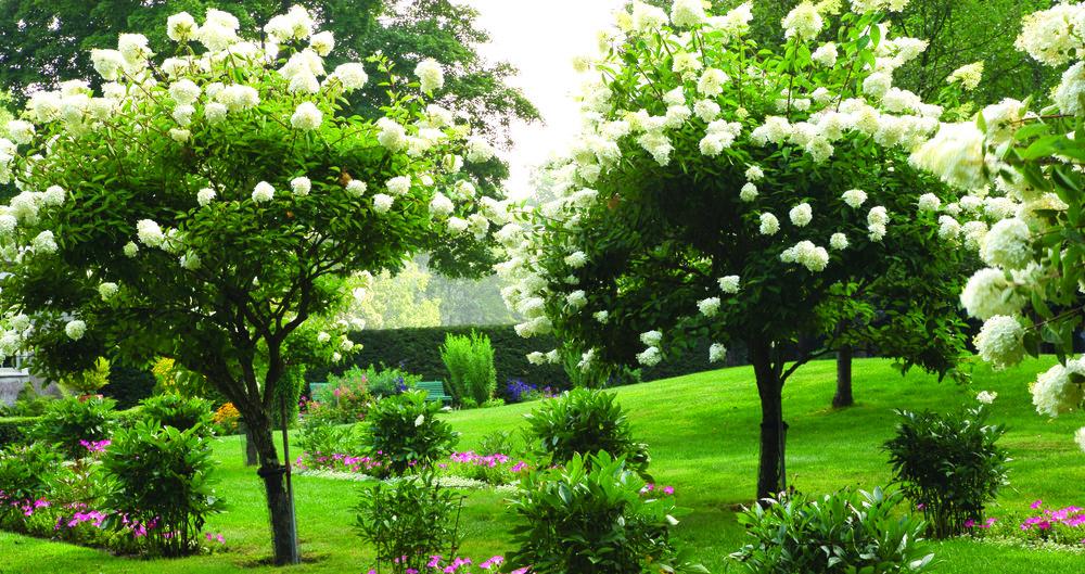 gardens_4.24x2.25.jpg
