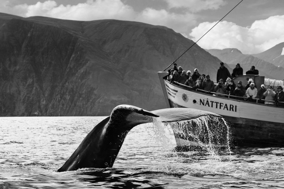 humpback-whale-fluke-in-front-of-nattfari-938x625.jpg