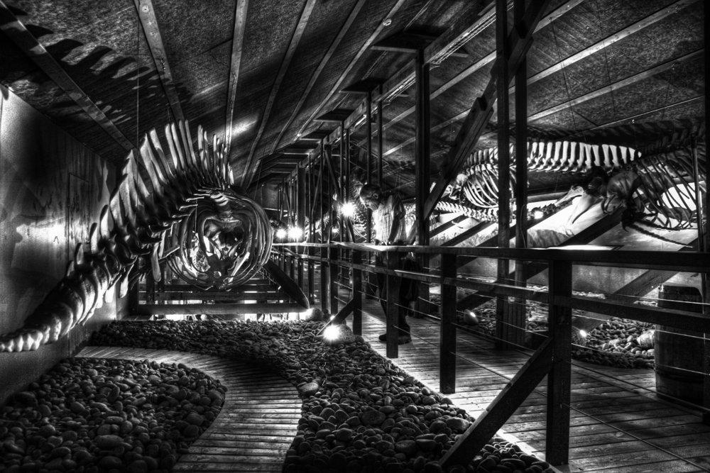 whale-museum.jpg