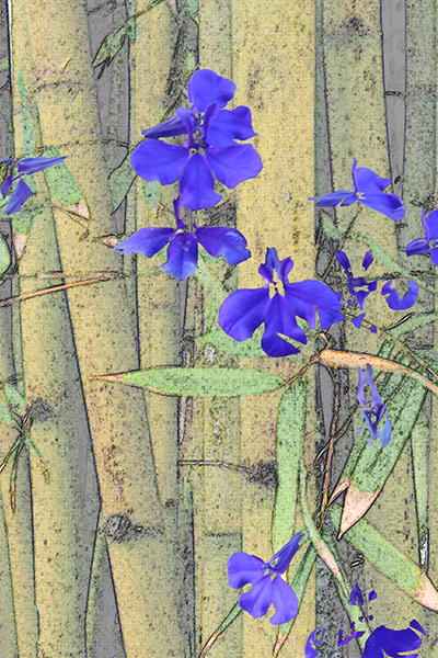 Bamboo with blue.jpg