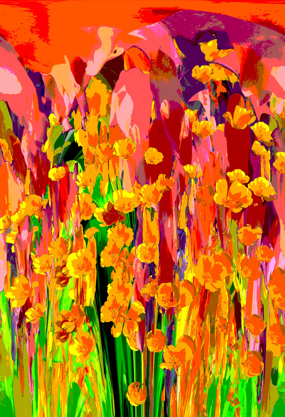 Poppies over color 2.jpg