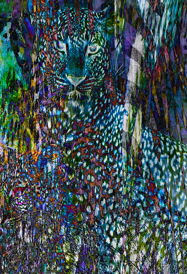 Color cat only 113x19.jpg