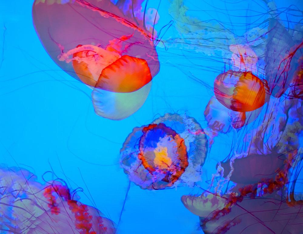 Double Jellyfish 2.jpg