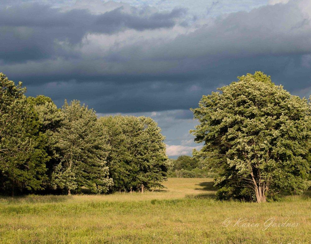 Hadley field