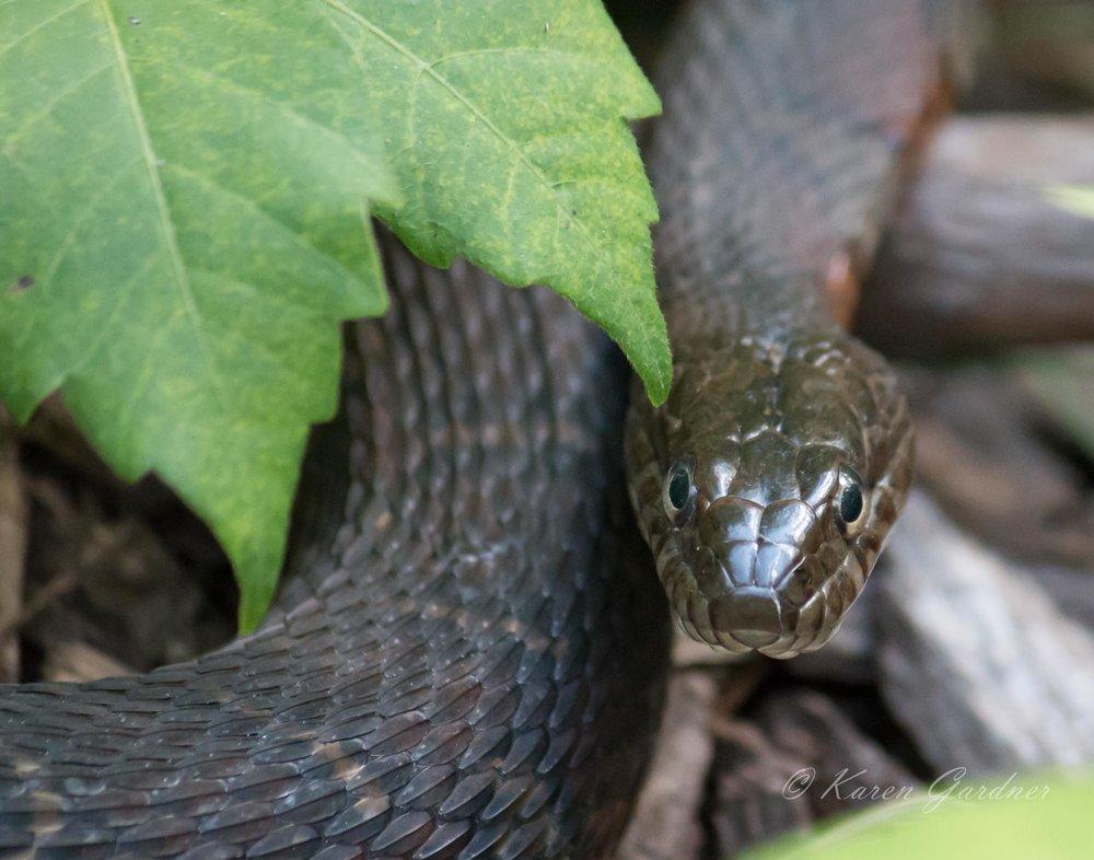 snake-1230.jpg