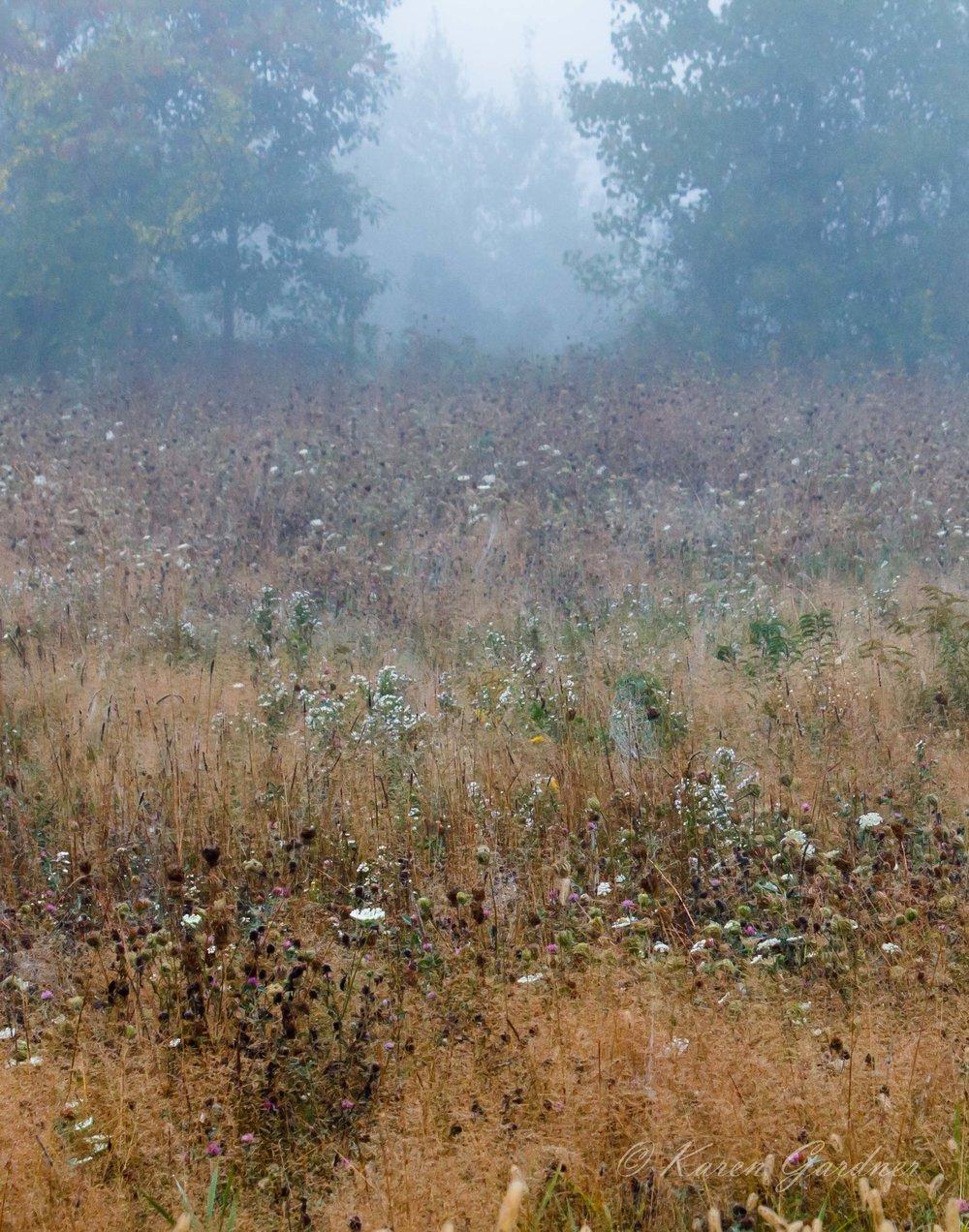 Hadley Field in Fog