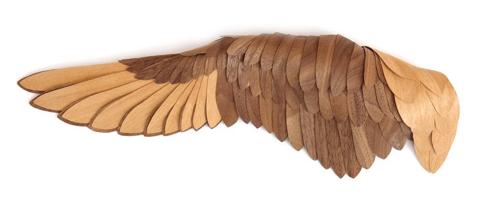 Egret Wing.JPG