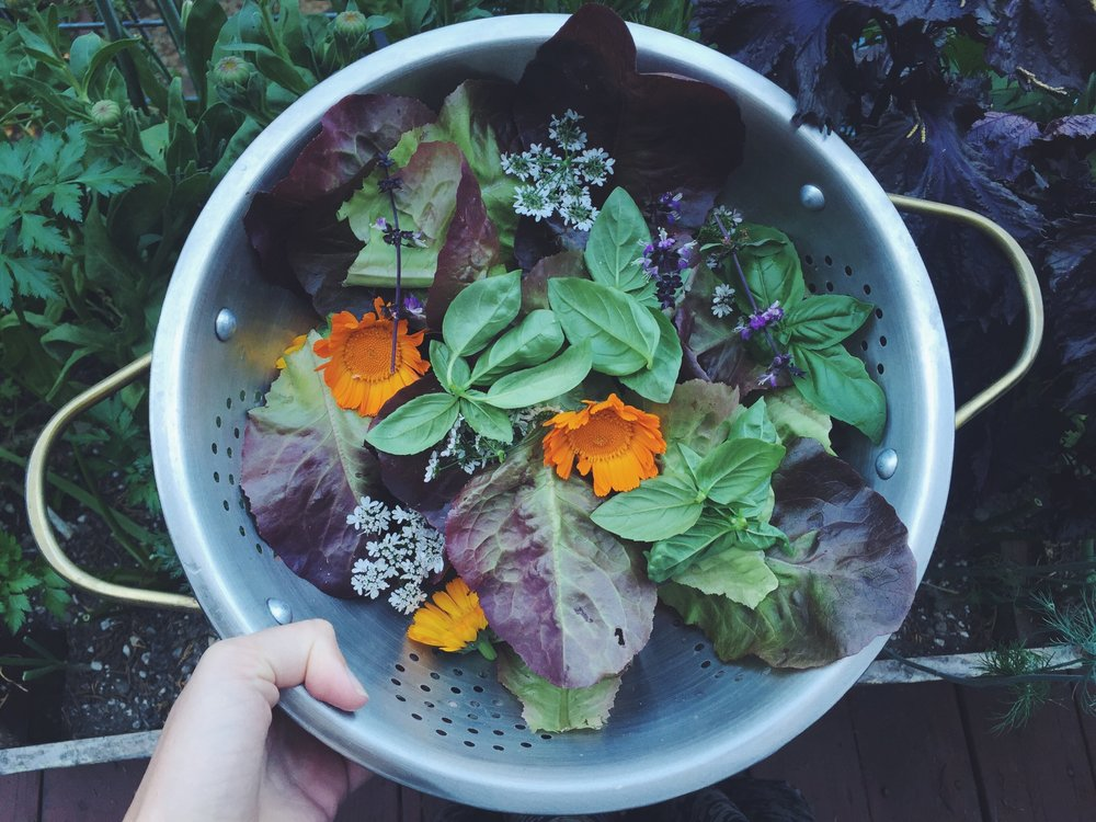 Its All About Texture - Adding a mix of greens + fresh herbs always makes a salad come alive. Here are some ideas for the seasons:                  Spring/Summer: Little Gems, Escarole, Spinach, Nasturtium Leaves, Basil, Cilantro, Mint +Arugula   Fall/Winter: Kale, Chard, Mustard Greens, Cabbage, Rosemary, Thyme + Marjoram