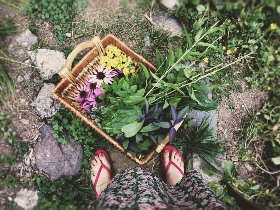 HErbS 101:A simple guide to everyday herbs we love. -