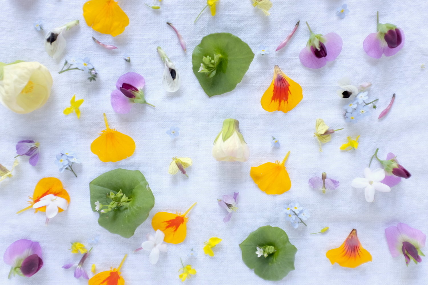 Kosmic Guide To Edible Flowers The Kosmic Kitchen