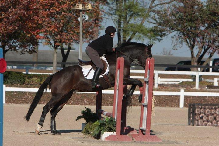 Megans horse 3.jpg