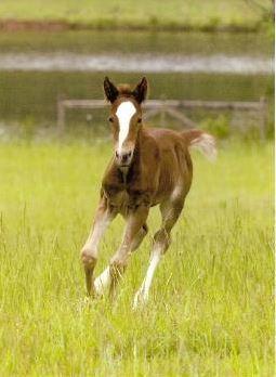 Graham as a foal.JPG