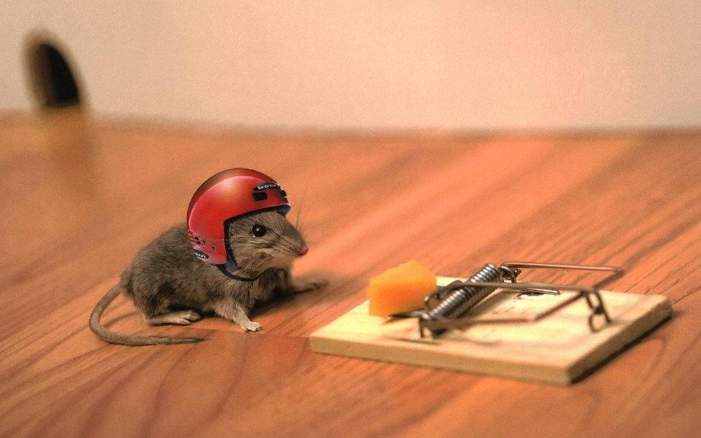 Risk-Taking Mouse.jpg